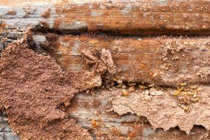 termite control - termite inspections